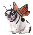 PET20101-Butterfly-Dog-Costume-thumb2